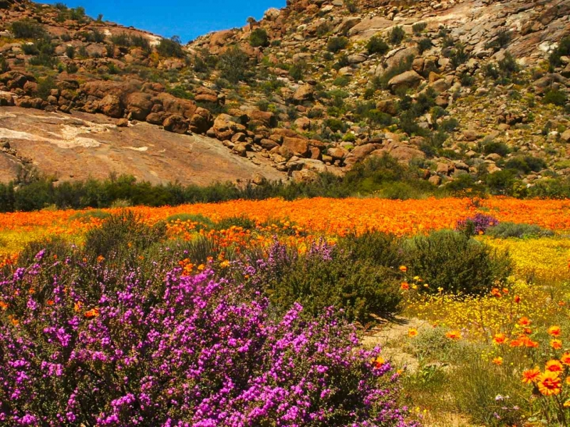 Southern Namibia | Namaqualand, West Coast, Richtersveld & Fish River Canyon
